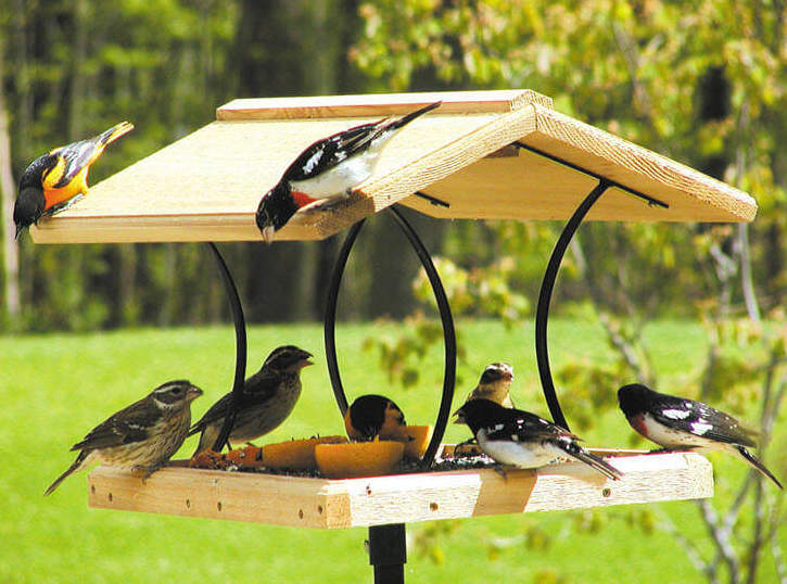 4 Simple & Effective Ways to Attract Birds to Your Backyard